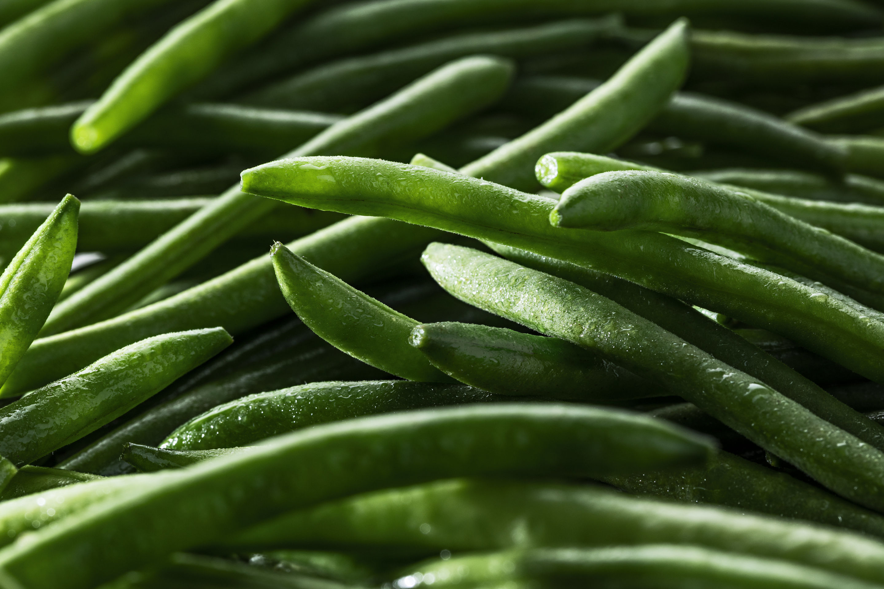 Le haricot vert cueilli main EXTRA-FIN